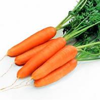 Семена моркови Рига F1 25000 семян (калибр. < 1,6) Rijk Zwaan