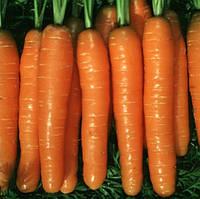 Семена моркови Монанта Нантес 250г. Rijk Zwaan