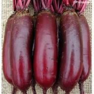 Семена свеклы Ломако 25000 семян Rijk Zwaan