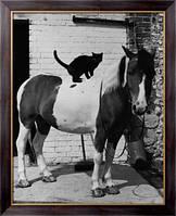 Картина Кошка на  пони, Неизвестен