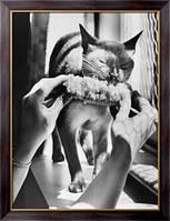 Картина Кормление кошки, Неизвестен
