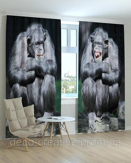 Фотошторы две обезьяны
