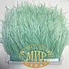 Тесьма страусиная  Цвет Mint Цена за  0.5м