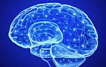 Вирус Зика изучили на мини-мозге.