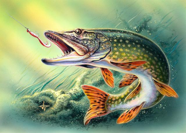 Рыболовные снасти, товары для рыбалки.