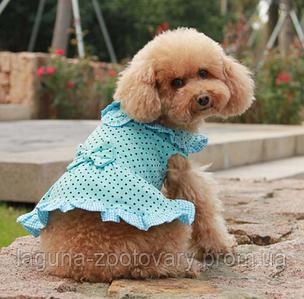 """Платье летнее для собак """"Горошек""""  размеры XS, S, M, L, розовый"""