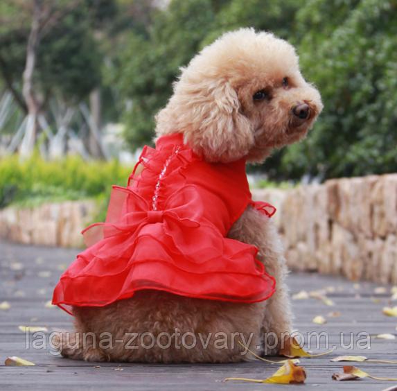 """Платье для собаки""""ЛИЛИАНА"""" размеры XS, S, M, L, XL"""