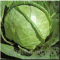 Семена капусты Каменная голова   0,5 кг. Польша