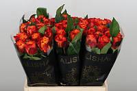 Роза голландская сорт Atomic