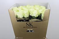 Роза голландская сорт Avalanche