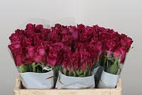 Роза голландская сорт Blueberry