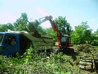 Удаление деревьев с участка., фото 1