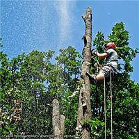 Вырубить деревья  Спил дерева Киев Вырубка леса зарослей