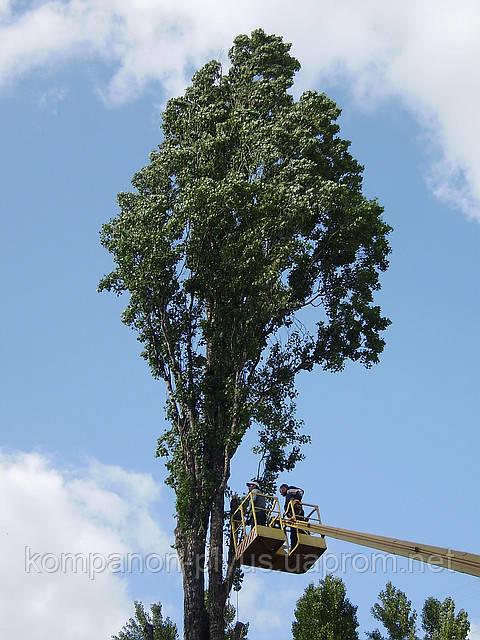 Обрезка деревьев в Киеве (044) 531 88 75