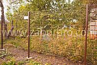 Ограждения для сада