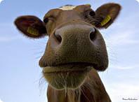Напольное покрытие для животноводческих ферм