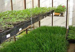 Выращивание в теплице 3
