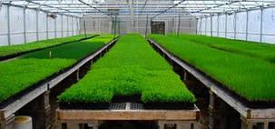 Выращивание в теплице 4