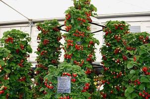 Выращивание в теплице -1