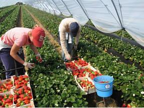 Выращивание в теплице 6