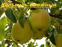 Саженцы плодловых деревьев яблони микс, оптом от производителя, мой сад, пром уа, Мариуполь