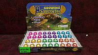 Игрушка - черепахи растущие в воде (цветные), лизуны