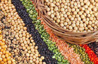 Зерно и бобовые (в том числе для проращивания)