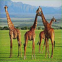 Туры на Занзибар