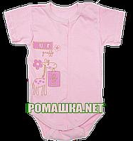 Детский боди-футболка р. 56 ткань КУЛИР 100% тонкий хлопок ТМ Алекс 3087 Розовый-1