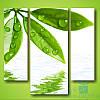 Модульная картина Зелёные листочки из 3 фрагментов