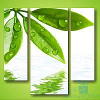 Модульная картина Зелёные листочки из 3 фрагментов, фото 1