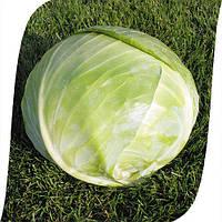 Семена капусты б/к Арривист F1 2500 семян Seminis