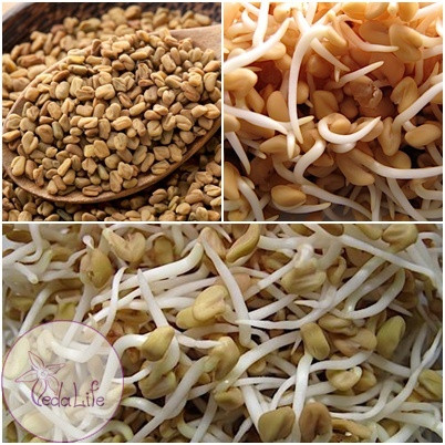 Самые легкие в проращивании – пряные семена Шамбалы!