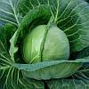 Капуста б/к ранняя Этма (Jetma F1) Rijk Zwaan 2.5 тыс семян калиброван