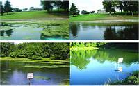 Очистка прудов и водоёмов