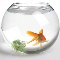 Корм д/риб 10г Фітоплант (Фитоплант)