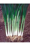 Семена лука на перо Грин Баннер 100 000 семян Seminis