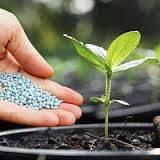 Добрива та стимулятори росту