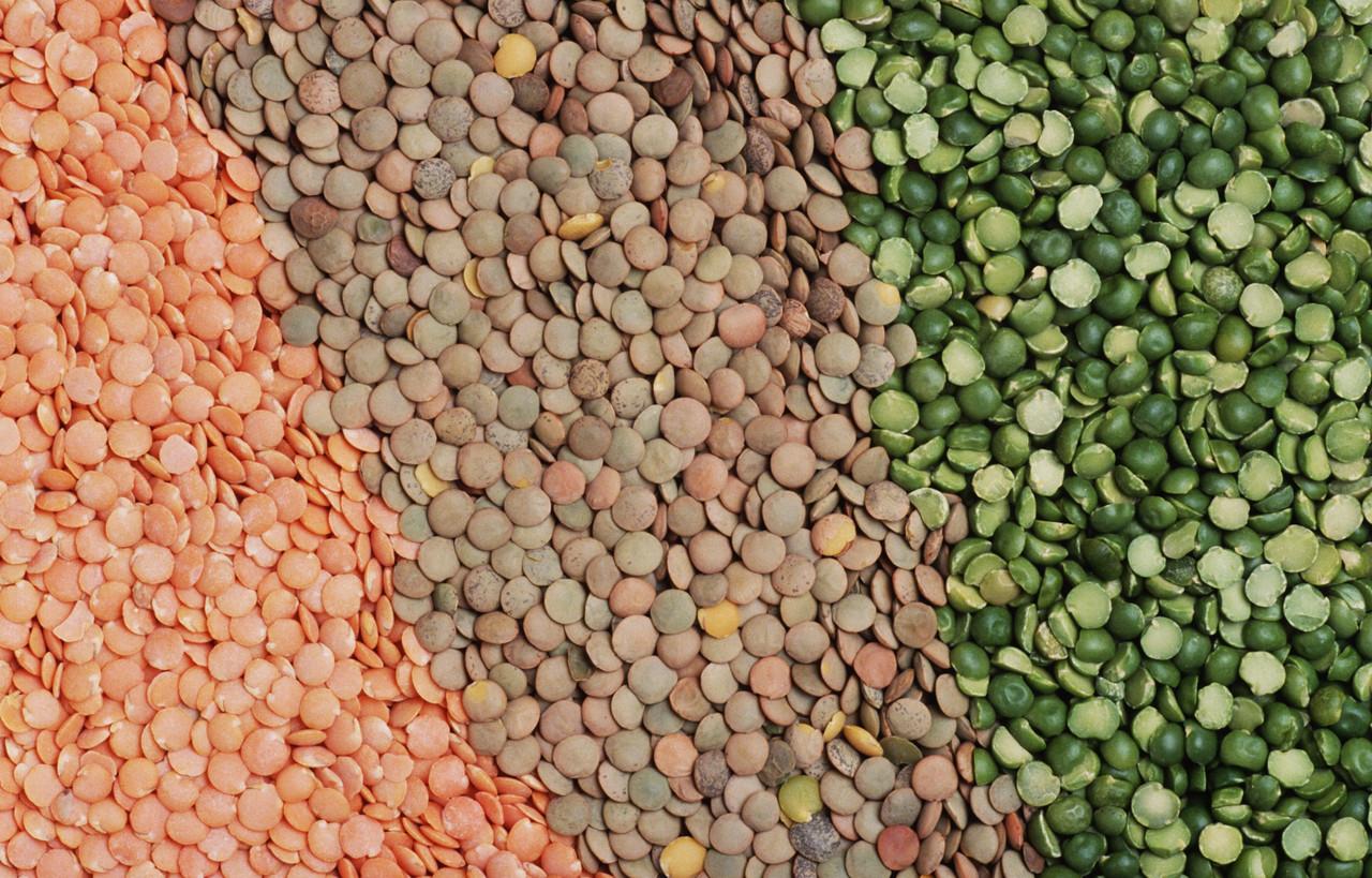 Исследование с/х продукции на массовую частичку белка(протеин)