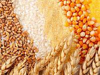 Лабораторные исследования сельскохозяйственной продукции