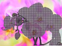 Схема для вышивания бисером Розовая орхидея КМР 2018