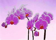 Схема для вышивания бисером Орхидея на розовом фоне КМР 2125