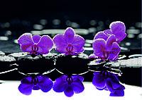 Схема для вышивания бисером Яркие орхидеи в отражении КМР 2124