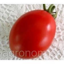 Насіння томату Велоз F1 1000 насінин Seminis