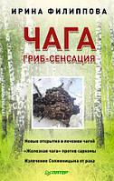 Чага гриб-сенсация   И.А. Филлипова