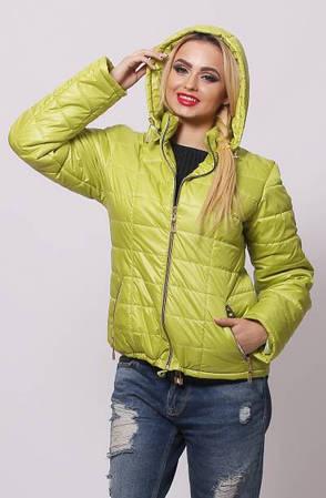 Женская спортивная куртка батальных размеров  ( Разные цвета)