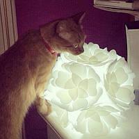 Судя по отзывам наших клиентов - коты очень любят лампы-уютницы