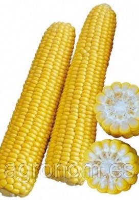 Кукуруза сахарная Рання Насолода F1 25 000 сем.
