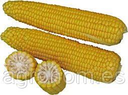 Семена кукурузы Добрыня F1 25 000 семян Lark Seeds