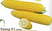 Кукуруза сахарная Уокер F1 20 сем Lark Seeds